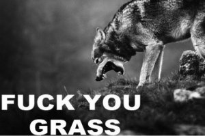 funny-pictures-auto-wolf-grass-473633
