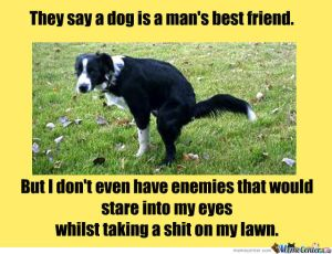 dogs-dogs-dogs_o_897800